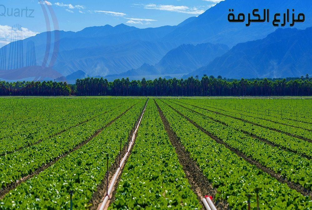 مزارع الكرمة
